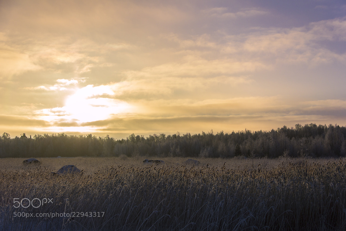 Photograph A quiet morning by Magnus Blomqvist on 500px