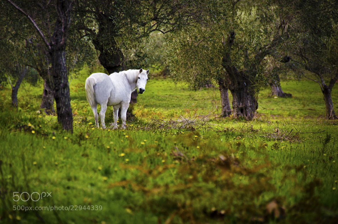 Photograph WHITE HORSE by Konstantinos Goulas on 500px