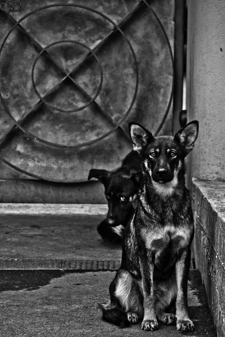 Photograph I will protect you! by Jernej Kovac on 500px