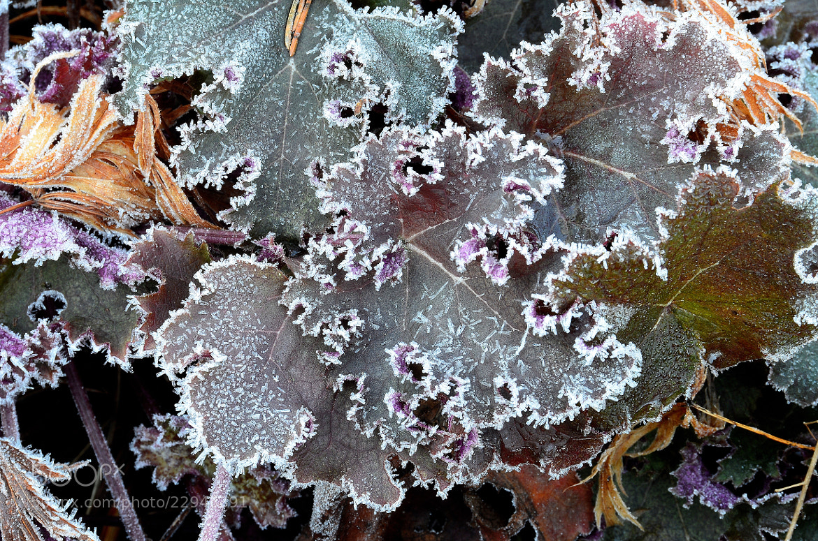 Photograph Frost III by Peter G. on 500px