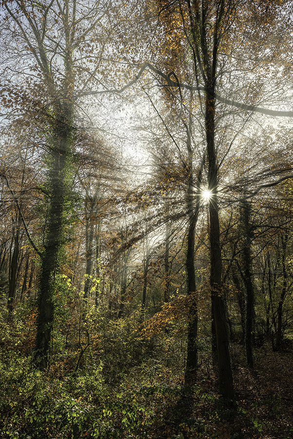 Photograph AUTUMN WOODLAND by COLIN MOLYNEUX on 500px