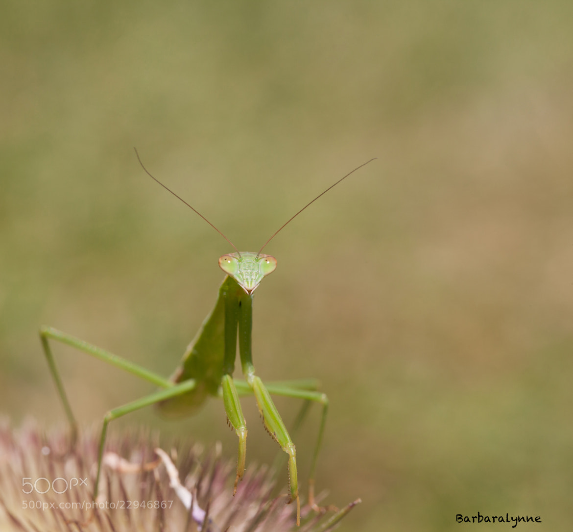Photograph Greenzilla by Barb D'Arpino on 500px