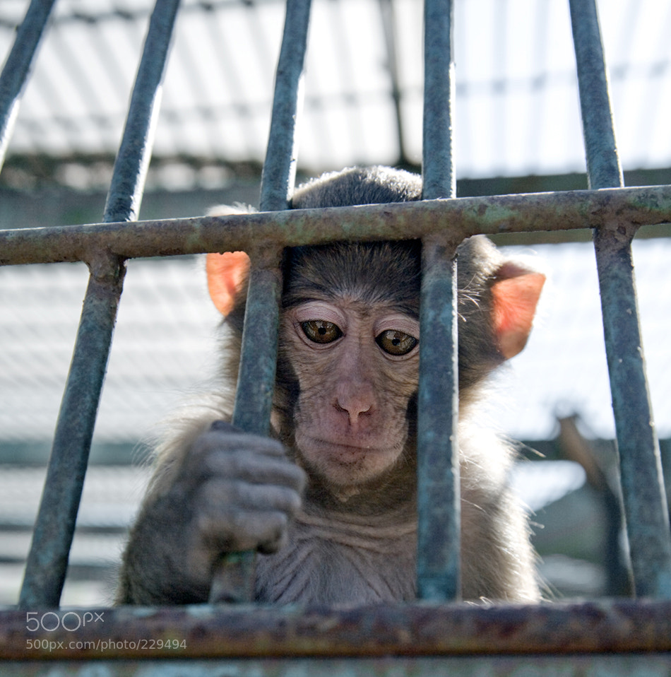 Photograph Prisoner by Artem Savateev on 500px