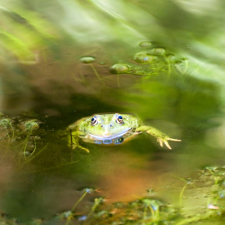 calm frog in stormy water
