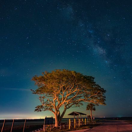 Boat ramp Tree and milky way