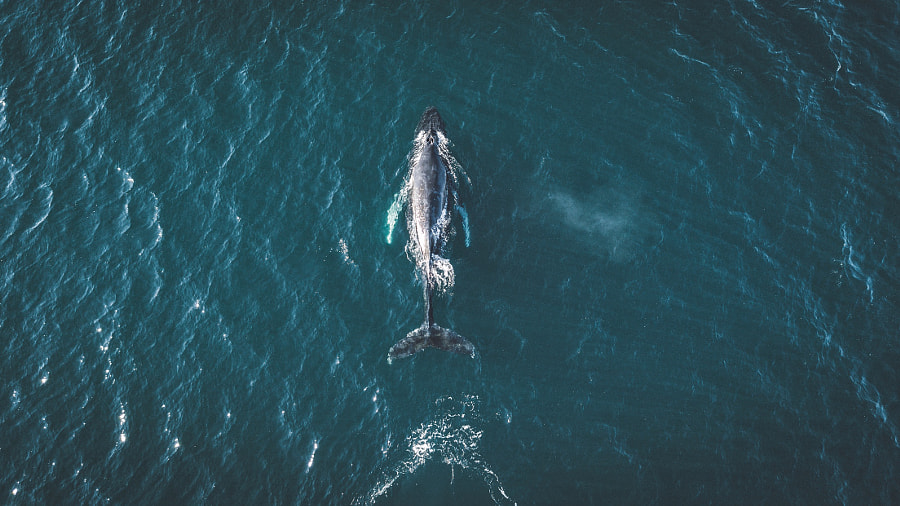 Once in life you have to see whales in person. Iceland is the perfect place for that. by Johannes Hulsch on 500px.com