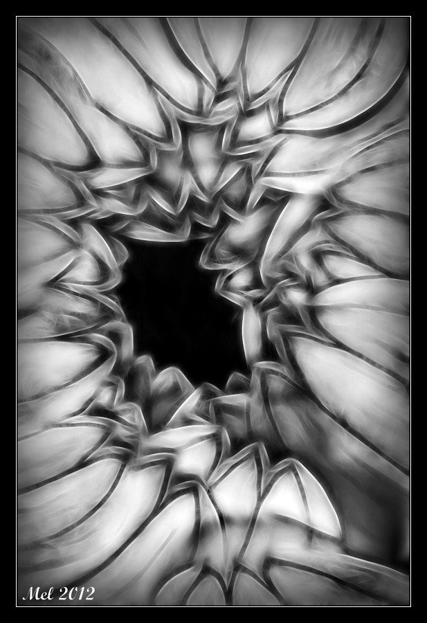 Photograph BW flower by Jaroslava Melicharová on 500px