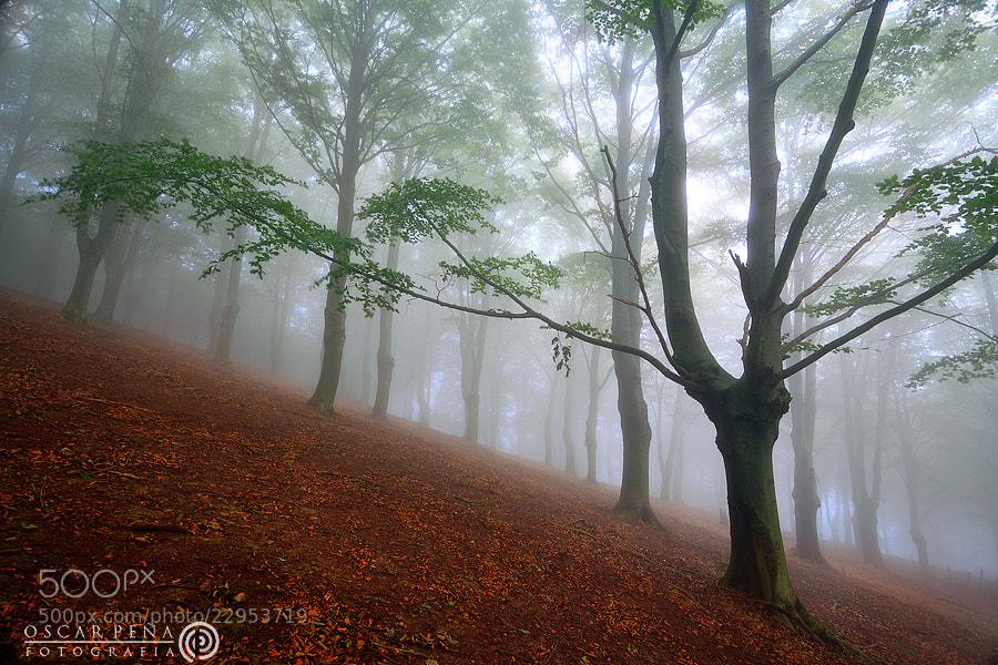 Photograph - Albor otoñal - by Oscar  Peña on 500px