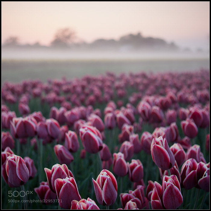 Photograph Netherlands 1 by Maciej Duczynski on 500px