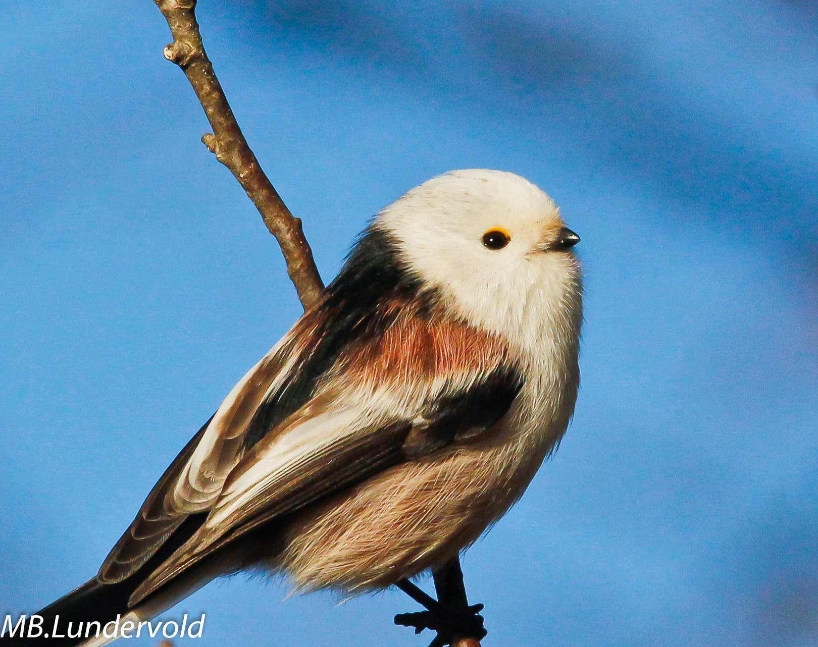 Photograph Tailed Tit in blue  by Mai-Britt Lundervold on 500px