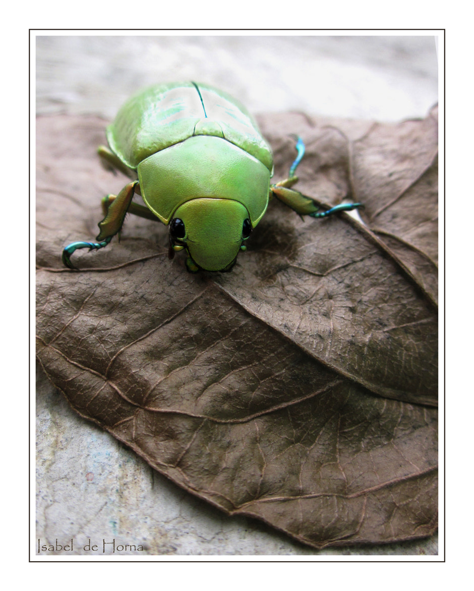 Photograph Jewel scarab by Isabel de Horna on 500px