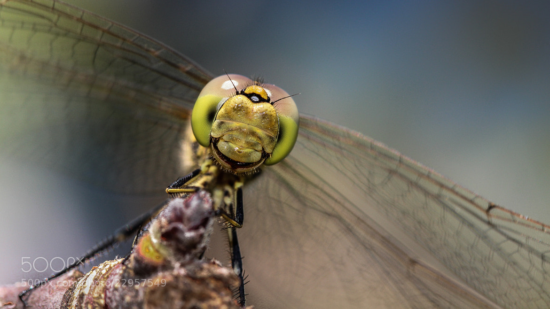 Photograph Smiley by Marcin Brygała on 500px