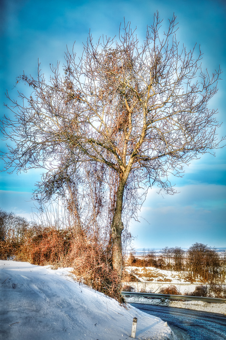 Photograph The Walnut Tree by Ernst Gamauf on 500px