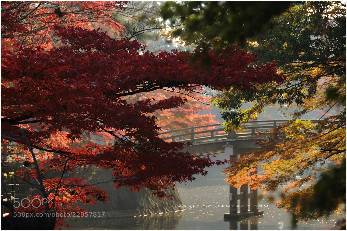 Photograph japan autumn  by Yoshi   on 500px