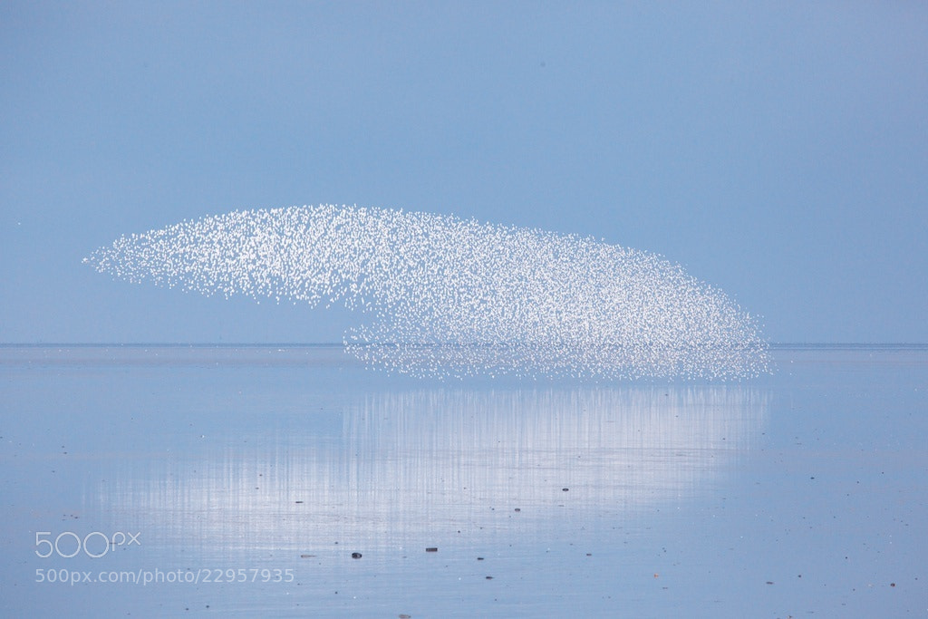 Photograph Birds shapes at sea  by Johan Hoogerbrug on 500px