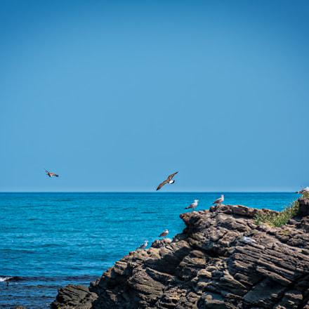 Landscape Black Sea