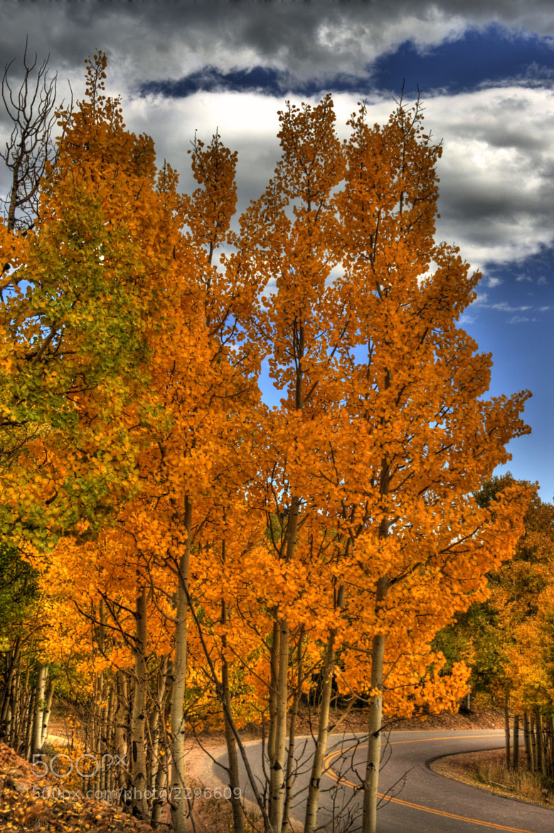 Photograph Golden Aspens by Tony  Baca on 500px