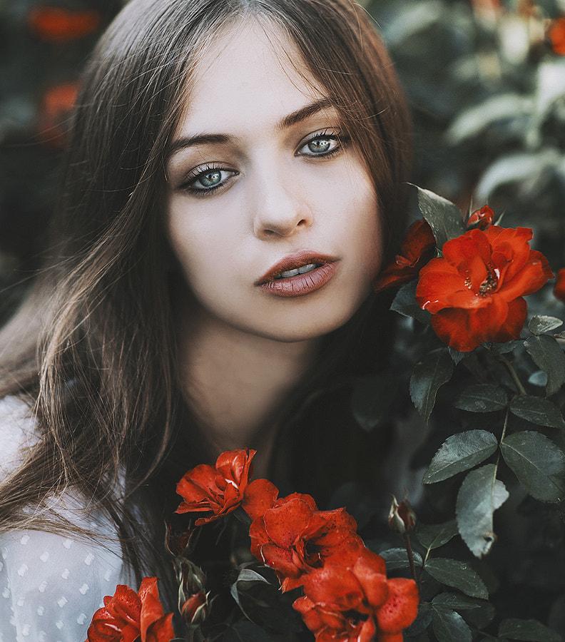 Rose beauty by Jovana Rikalo on 500px.com