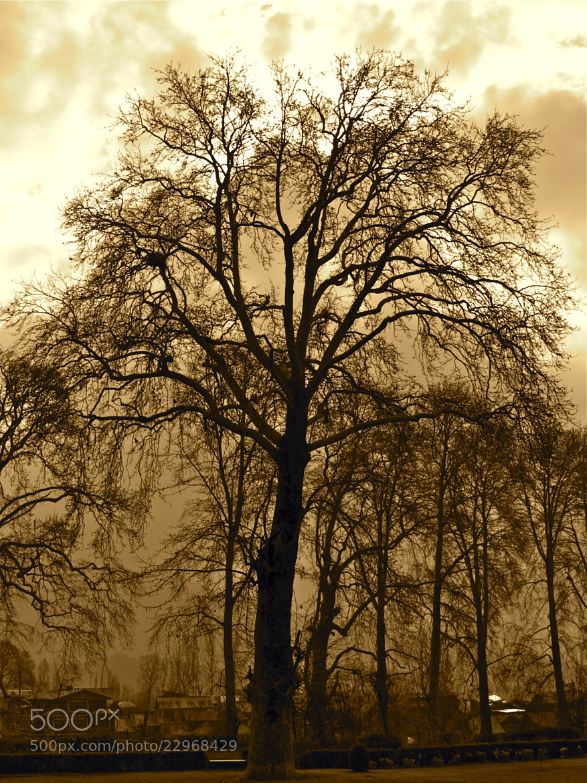 Photograph Golden Shot by Vishal Gulati on 500px