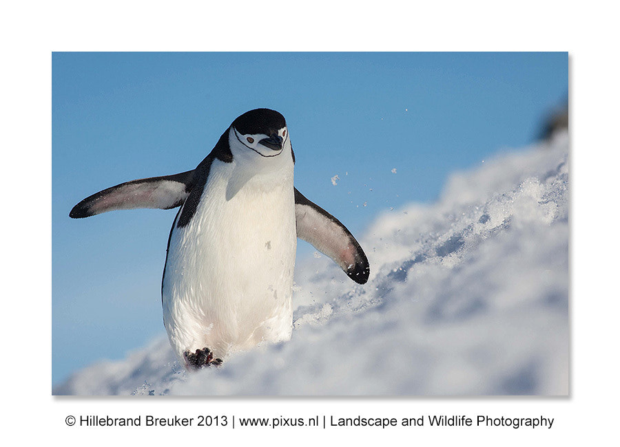 Photograph Running up that hill! by Hillebrand Breuker on 500px