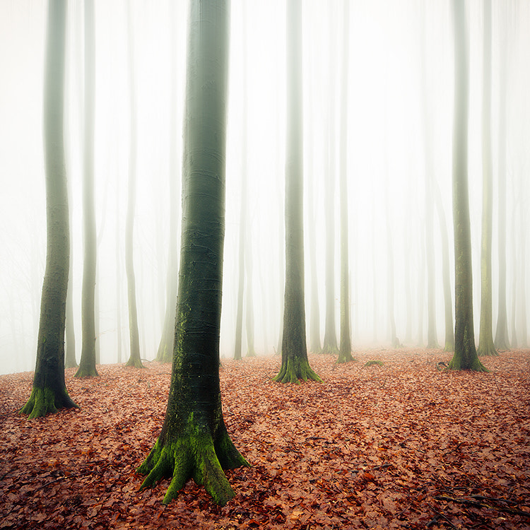 Photograph foggy forest by Jens Fersterra on 500px