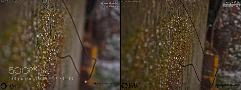 Photograph Algae by Abdullah Dwaikat on 500px