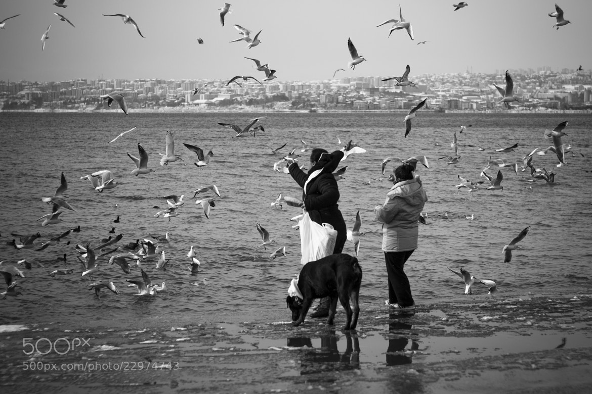 Photograph Seagulls of Istanbul by Latife Baudet on 500px