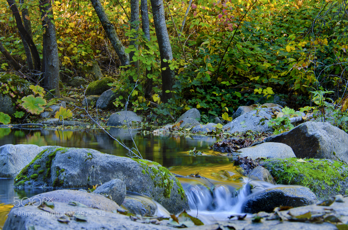 Photograph Yuba River Pond by Dianne Phelps on 500px