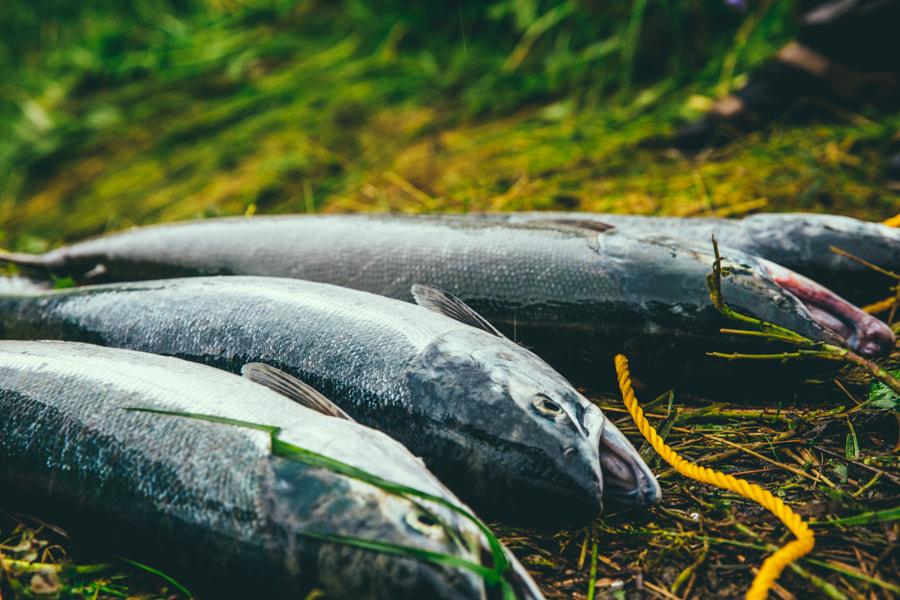 Traveling & fishing through Kenai, Alaska by Austin Neill on 500px.com