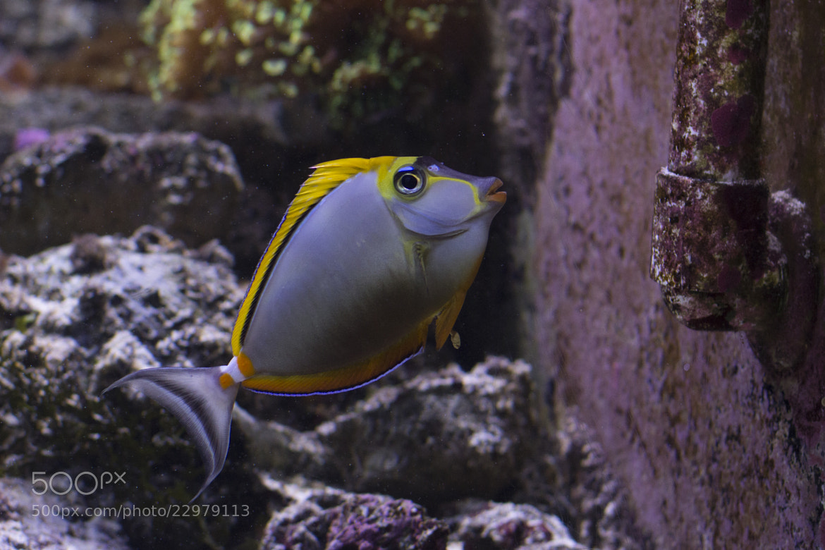 Photograph Fish and pipe  by Juanita  Angel  on 500px