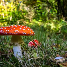 mushroom dutch