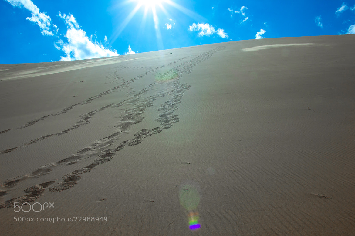 Photograph Footsteps in the Dune by Alex Karasyov on 500px
