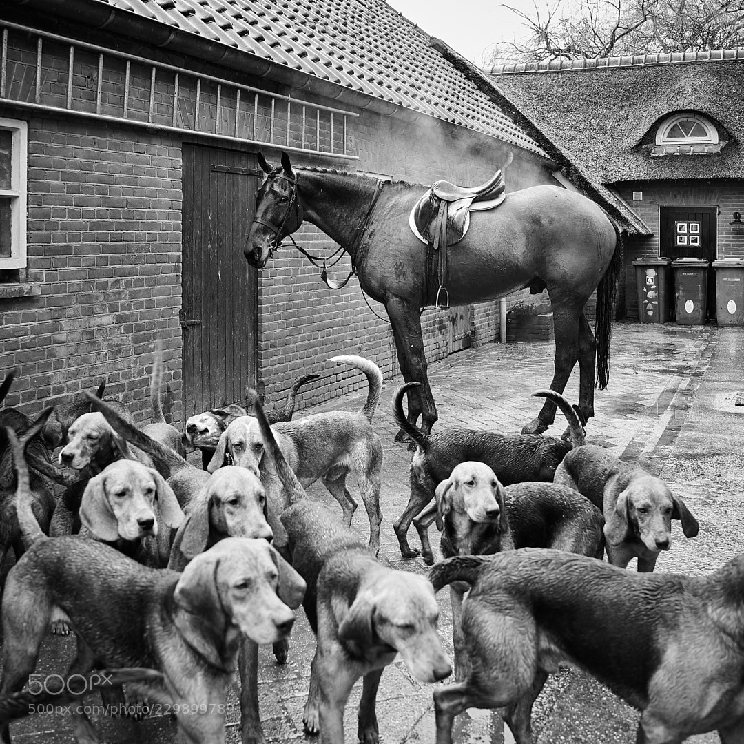 A horse with his dogs.