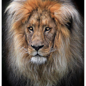 Portrait by Klaus Wiese (Wiese)) on 500px.com