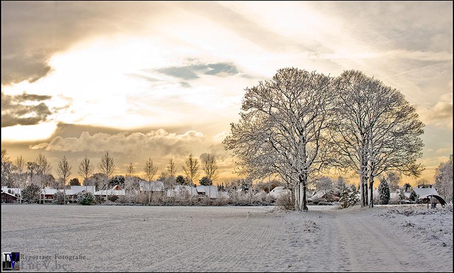 Winter Sun #2