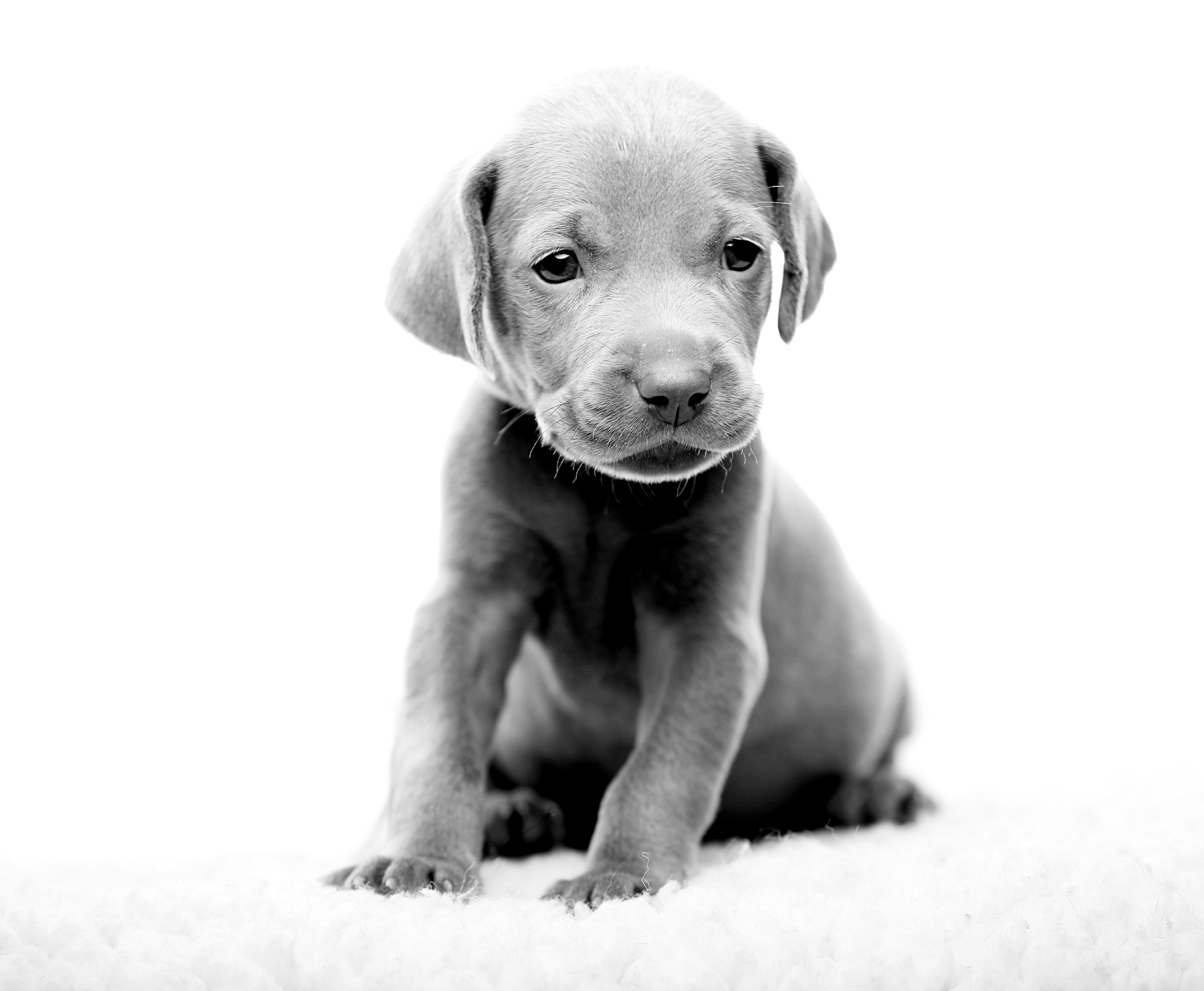 Photograph Woof by Silverlight-images on 500px