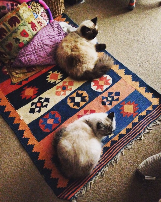 Bonnie, Boris and the rug by Iracema Cema on 500px.com