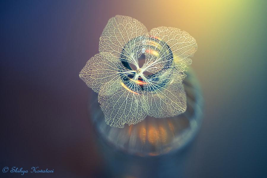 Weakness and Beauty by Shihya Kowatari on 500px