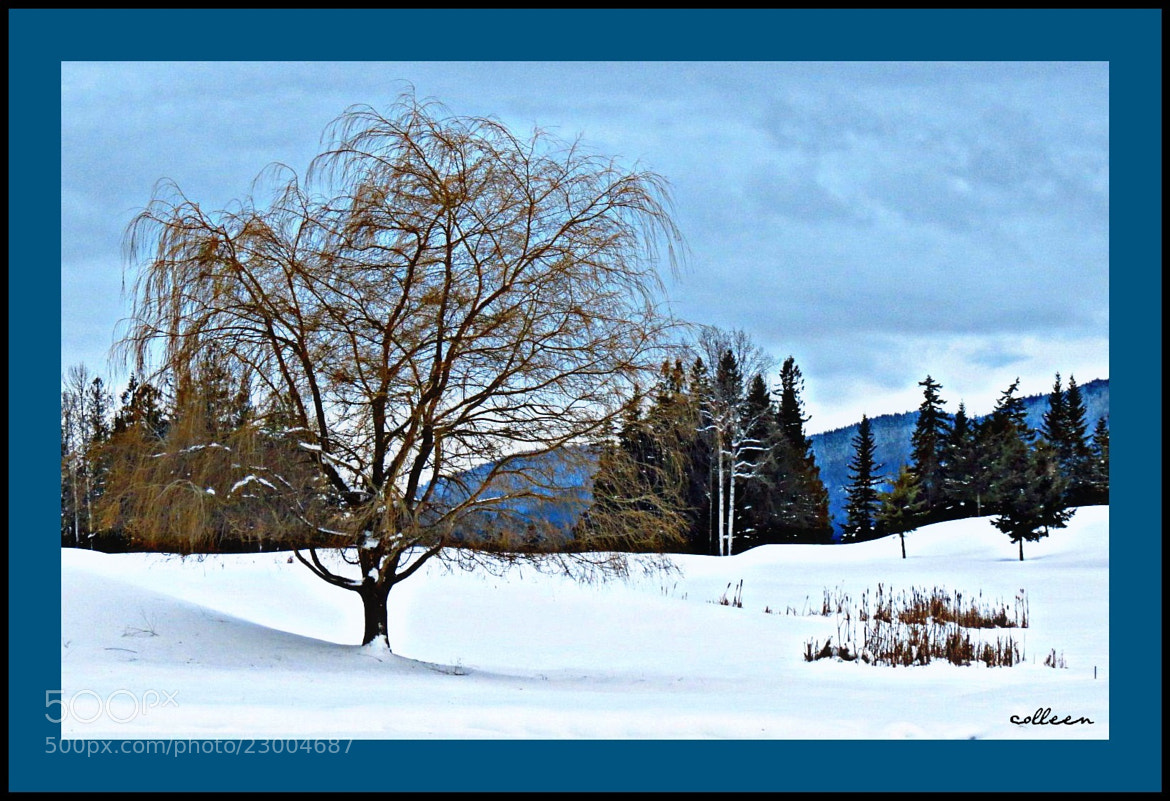 Photograph Blues! by colleen thurgood on 500px