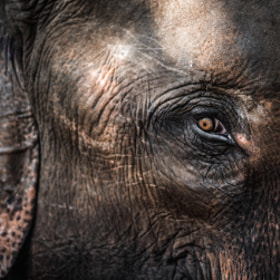 Elephant by Mike Kolesnikov on 500px.com