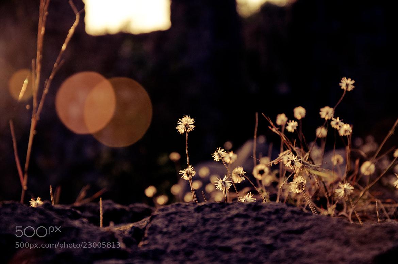 Photograph Morning bliss by Arun Krishnan on 500px