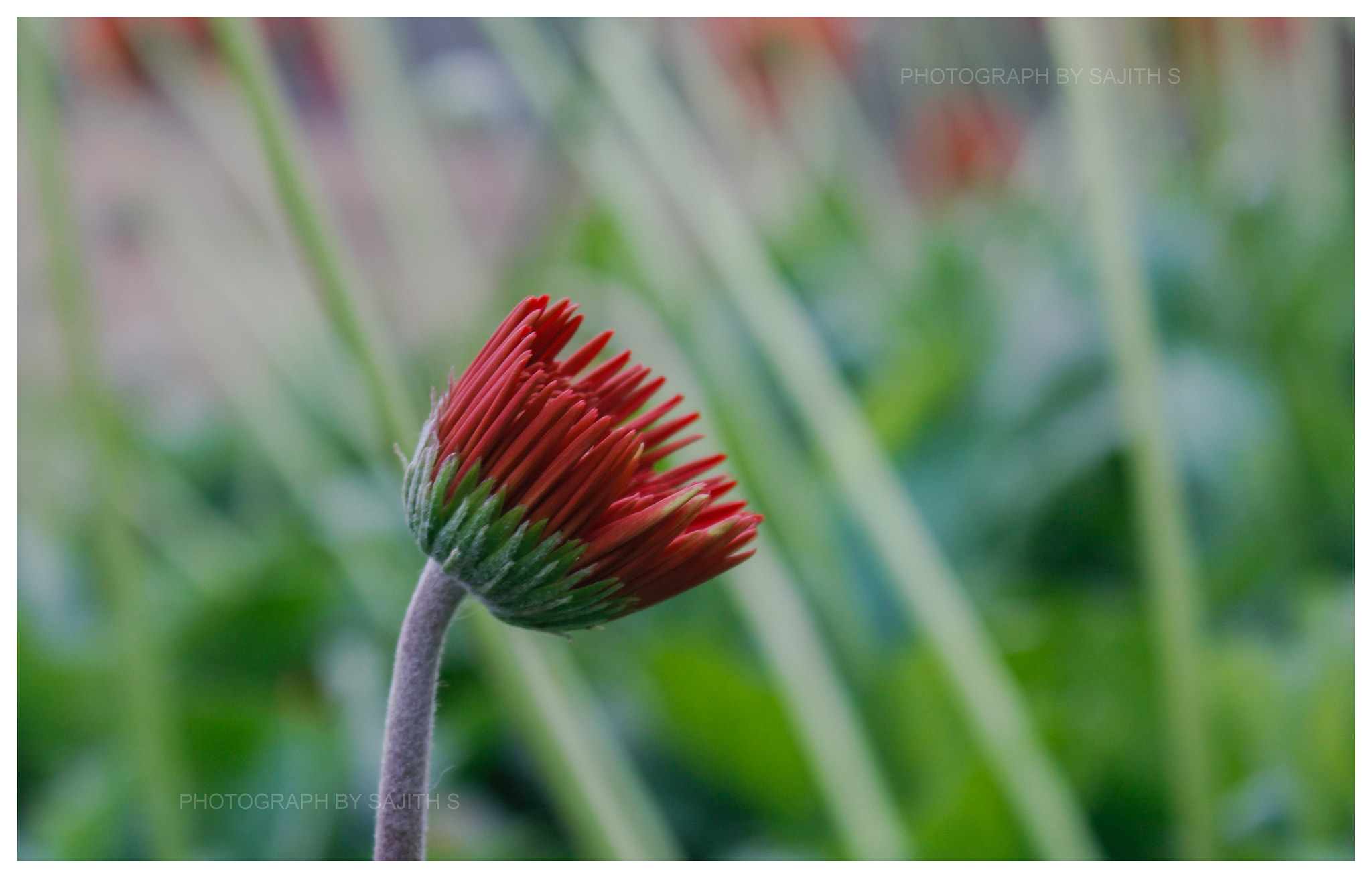 Photograph Flower by Sajith S on 500px