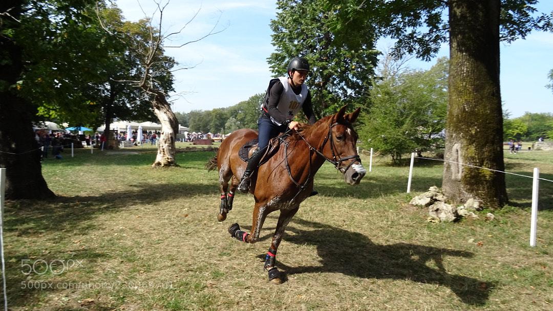 Karpatia Horse Show 2017