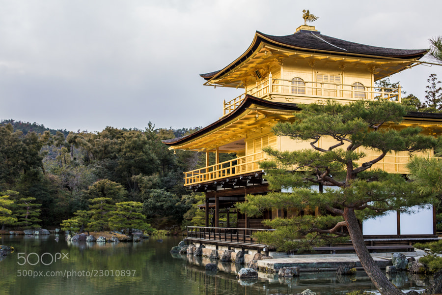 Photograph Golden Temple by Tim Grey on 500px
