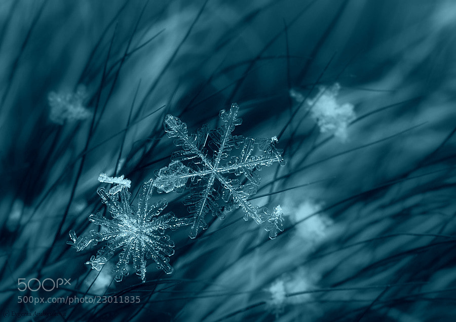 Snowflake #2 by Evgenia Andryukova on 500px.com