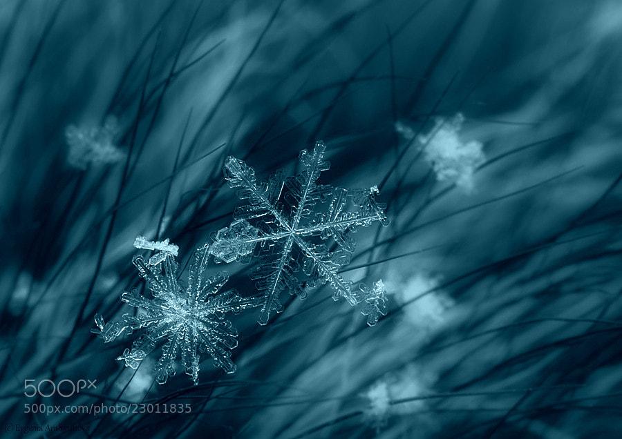 Snowflake #2 by Evgenia Andryukova on 500px.com
