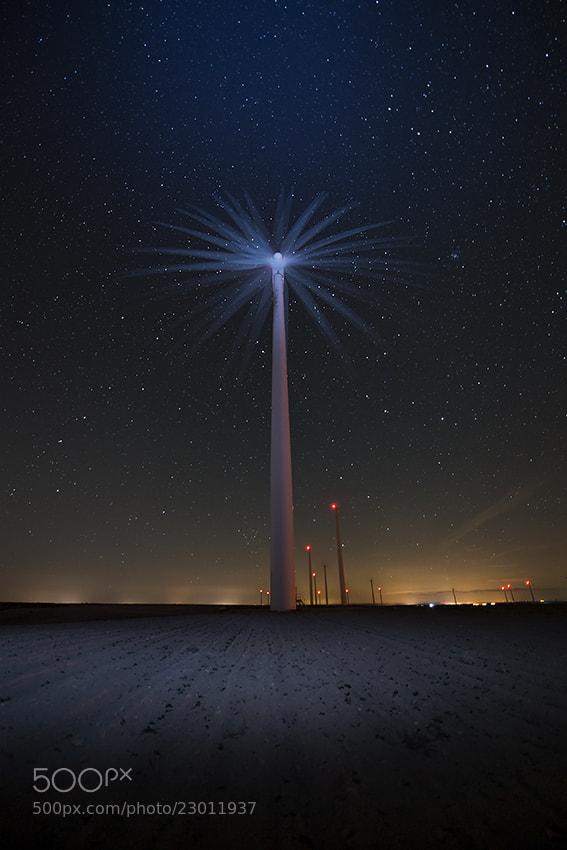 Photograph Flower of light by David Martín Castán on 500px