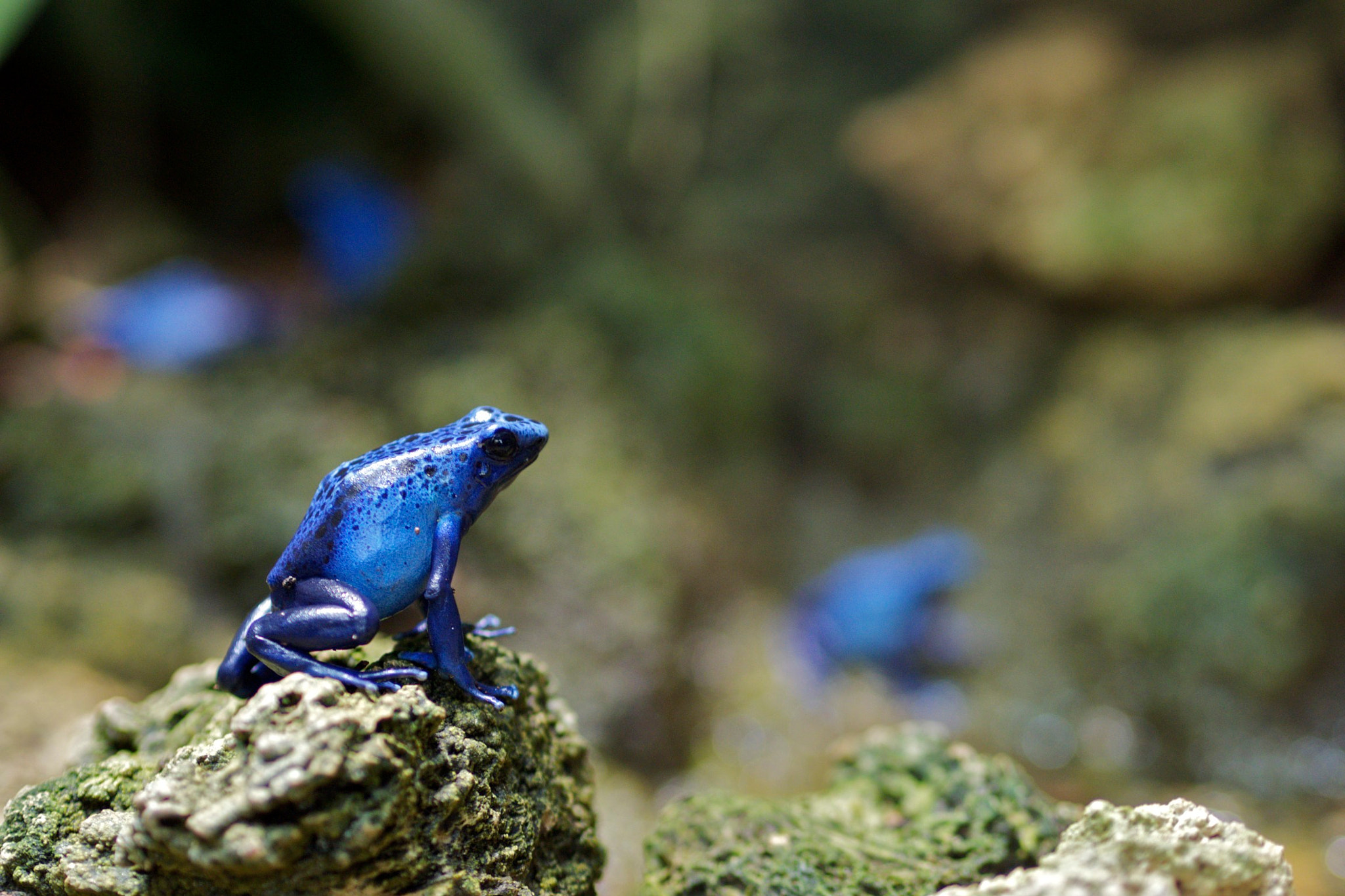 Photograph Blue Frog by Philipp Weimer on 500px