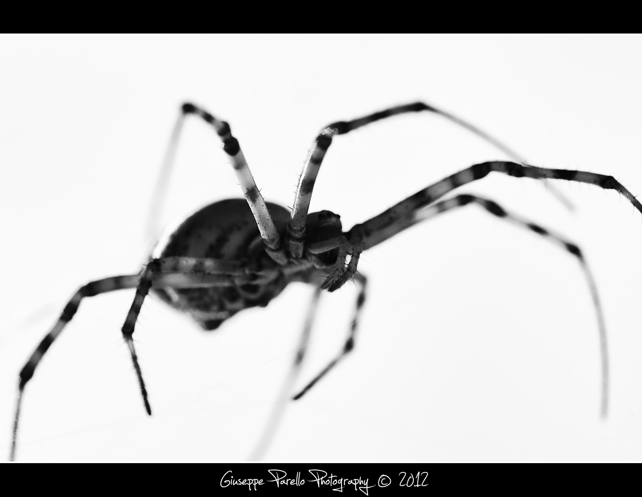 Photograph Spider silhouette by Giuseppe Parello on 500px