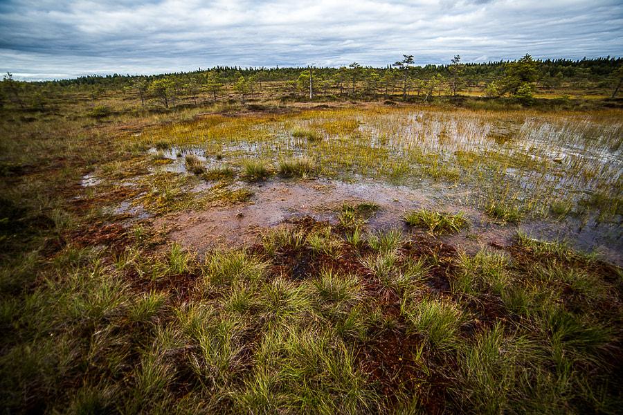 torronsuo by Simo Ikävalko on 500px.com
